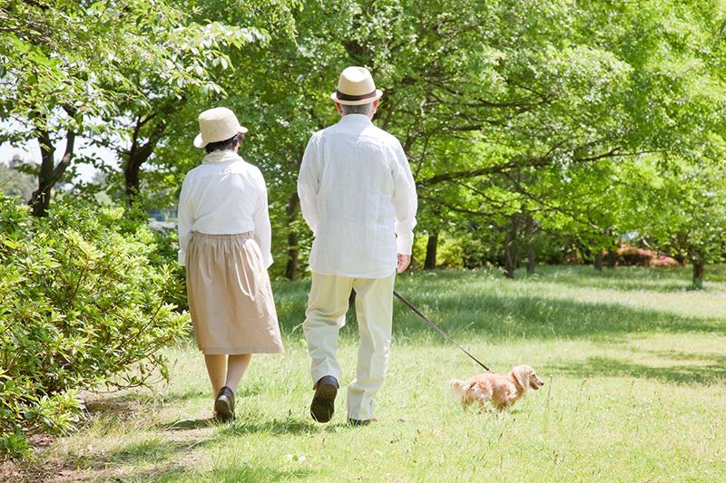 緑の中散歩をする老夫婦